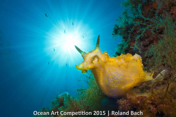 2015 Ocean Art Underwater Photo Competition winners