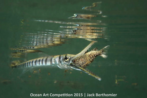 1st-cb-ocean-art-2015-jack-berthomier-1200.jpg