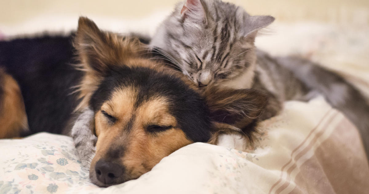 Your pets and your health - 10 scary diseases pets give people