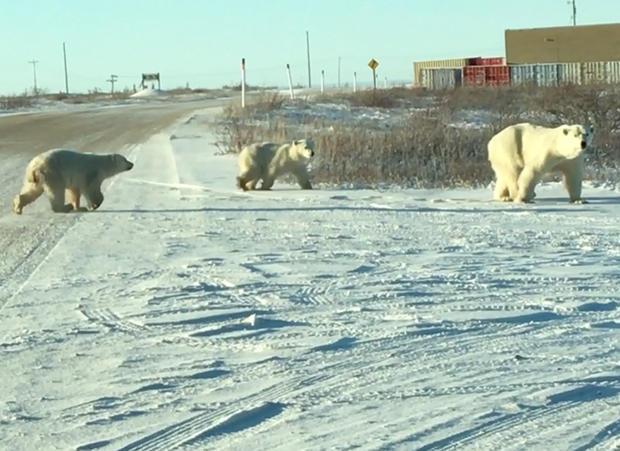 churchill-manitoba-polar-bear-capital-promo.jpg