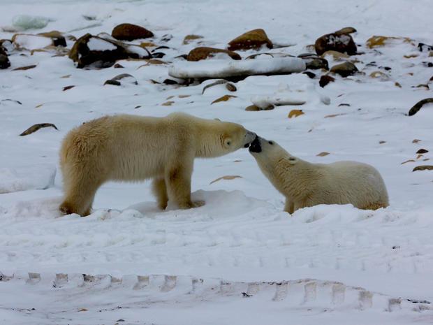 churchill-manitoba-polar-bear-capital-dustin-stephens-img1848.jpg