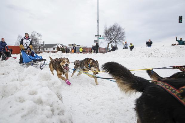 Iditarod dog-sled race-2016-03-06t021318z40215591gf10000335147rtrmadp3usa-iditarod.jpg