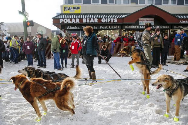 Iditarod dog-sled race-2016-03-06t015750z1387633417gf10000335133rtrmadp3usa-iditarod.jpg