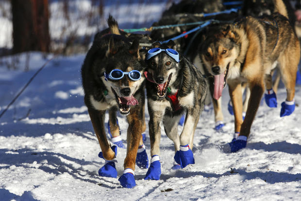 Iditarod dog-sled race-2016-03-07t072230z608025333d1besrcfnqaartrmadp3usa-iditarod.jpg