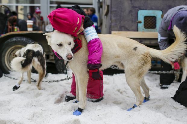 Iditarod dog-sled race-2016-03-06t025209z1310488297gf10000335143rtrmadp3usa-iditarod.jpg