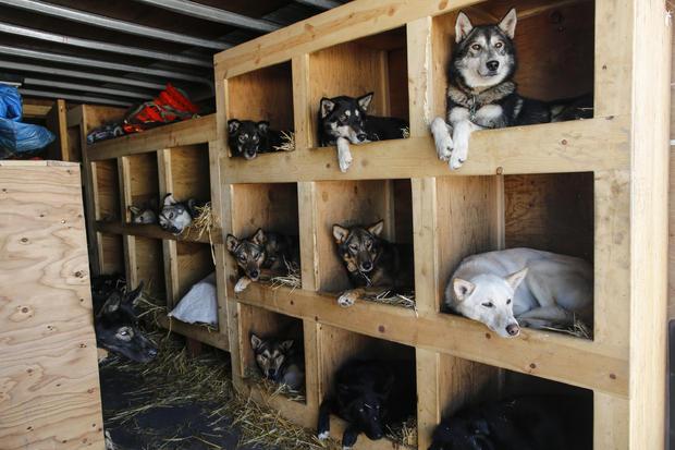 Iditarod dog-sled race-2016-03-07t072230z861809164d1besrcfnqabrtrmadp3usa-iditarod.jpg
