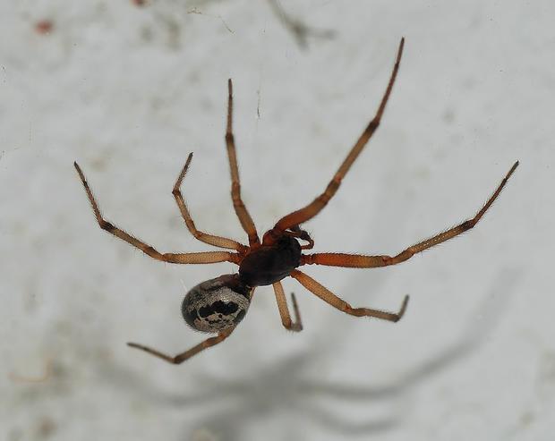 spider2007-3.jpg