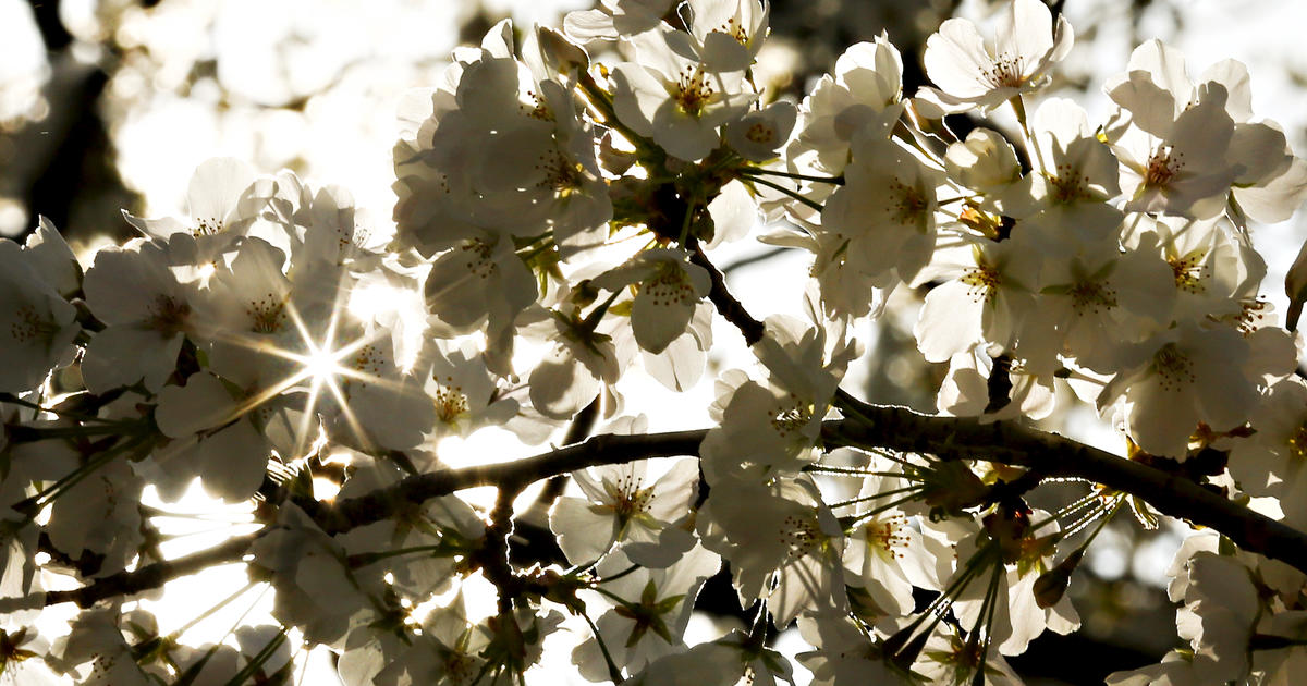 Spring Equinox Spring Is Sprung But >> First Day Of Spring Here S What You Should Know About The Spring