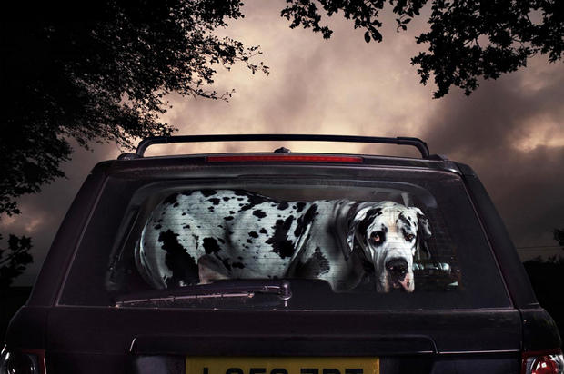"""The Silence of Dogs in Cars"""