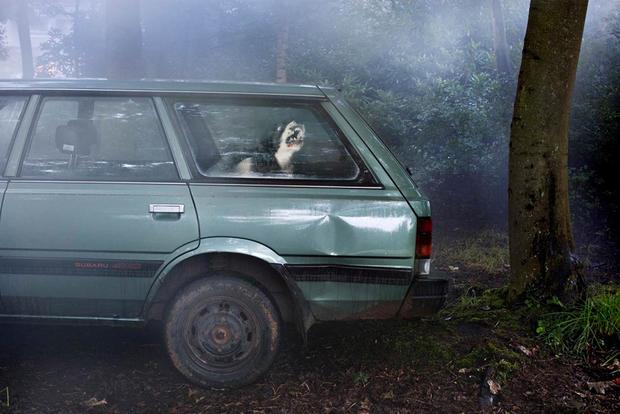 dogs-in-cars-congo-by-martin-usborne.jpg