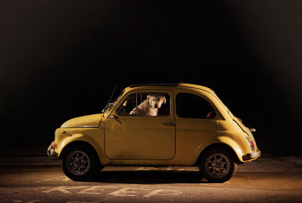 dogs-in-cars-milo-by-martin-usborne.jpg