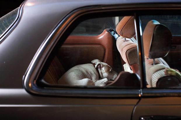 dogs-in-cars-bones2-by-martin-usborne.jpg