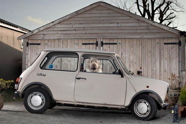 dogs-in-cars-boris-by-martin-usborne.jpg
