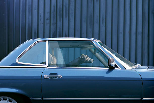 dogs-in-cars-maus-by-martin-usborne.jpg