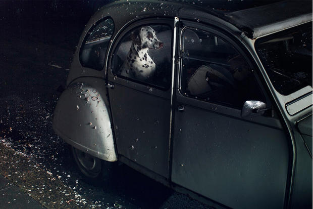 dogs-in-cars-margaux-by-martin-usborne.jpg