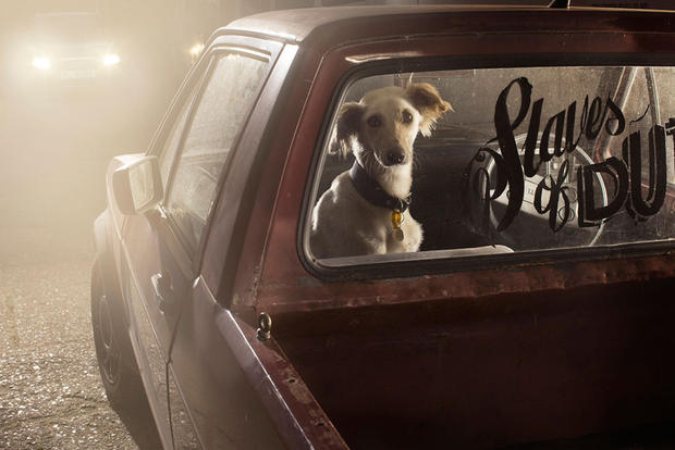 dogs-in-cars-prince-by-martin-usborne.jpg