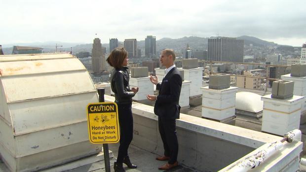 satmo0415sf-hotel-rooftop-bees.jpg