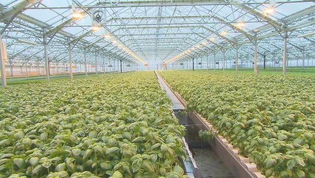 urban-greenhouseframe52151.jpg