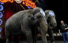 Ringling Bros. circus ends elephant act amid animal cruelty concerns