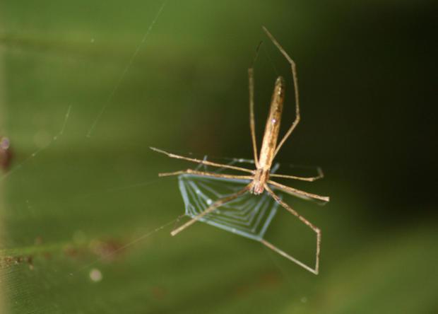 net-spiders-2.jpg