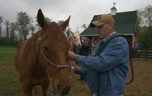 Horses help vets cope with PTSD