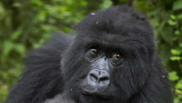 Critically endangered species and beloved animals at risk