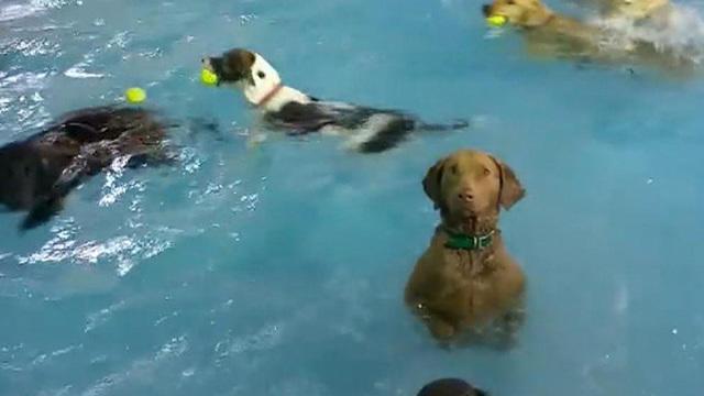 ctm0616dogs-pool1079561640x360.jpg