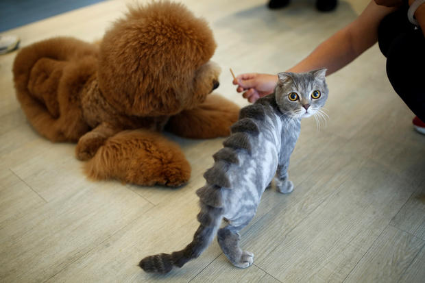 Hair-raisingly wild new pet grooming fashion