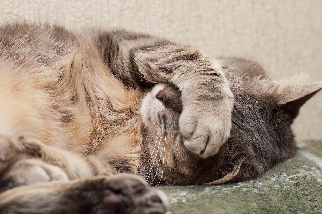 feline kidney infection treatment at home