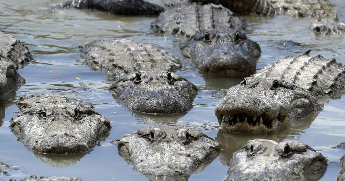 Florida Man Threatened To Feed Boy To Alligators Police