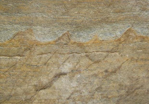 greenland-fossil.jpg