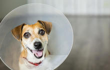 9 ways to get cheap or free vet care for your pet