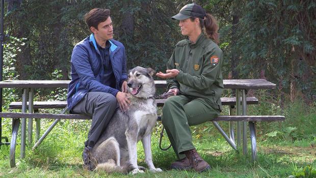 denali-dogs-conor-knighton-ranger-620.jpg