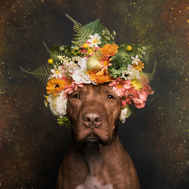 flower-power-credit-sophie-gamand.png