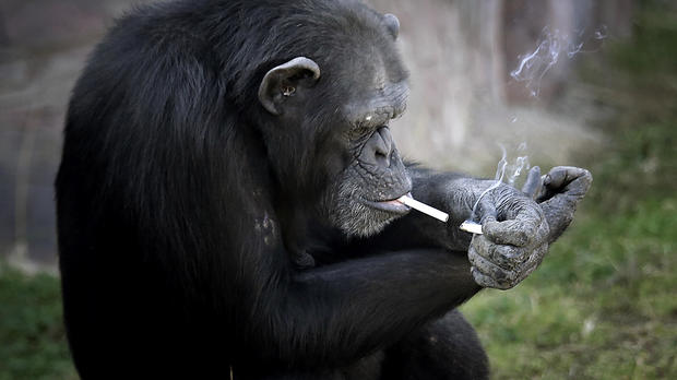 ap-smoking-chimp1.jpg