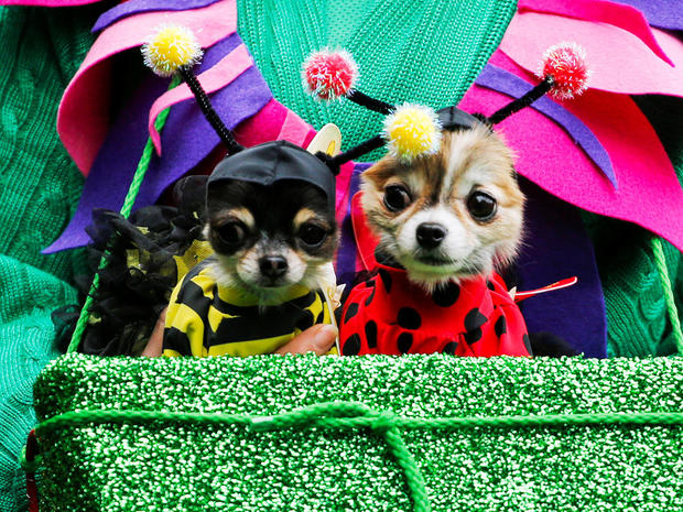 halloween-dog-parade-nyc-s1aeuinbhwab-rtrmadp.jpg