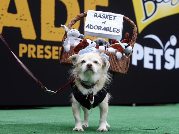 halloween-dog-parade-nyc-ap-541580810341.jpg