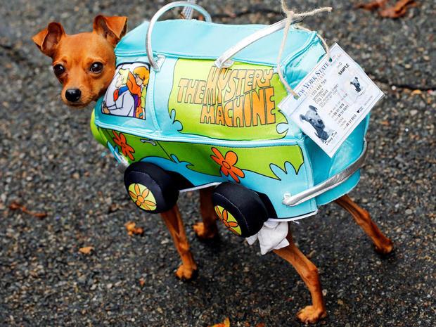 halloween-dog-parade-nyc-s1aeuincvdaa-rtrmadp.jpg