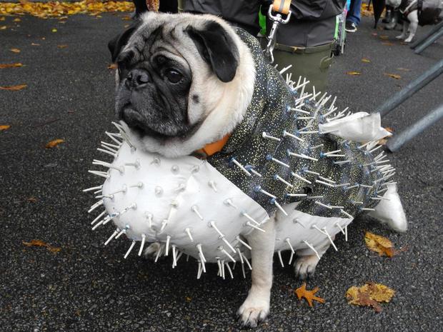 halloween-dog-parade-ap-749366107869.jpg