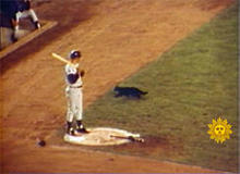 black-cat-wrigley-field-1969-244.jpg
