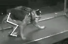 monkey-walking-youtube2.jpg