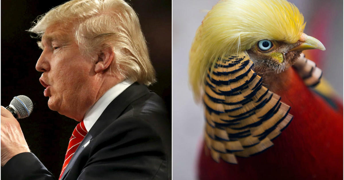 This Bird Has Hair Like Donald Trump And The Internet Can