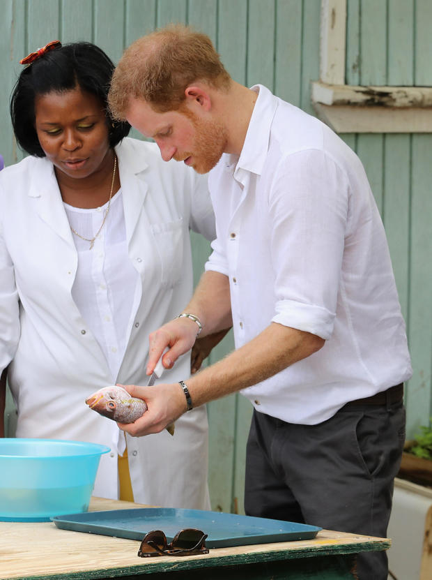 prince-harry-fish-cleaning-2016-11-22.jpg