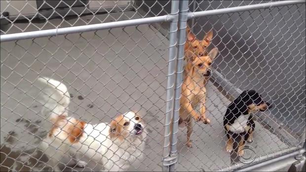 martinez-animal-adoptions-3-2016-12-17.jpg