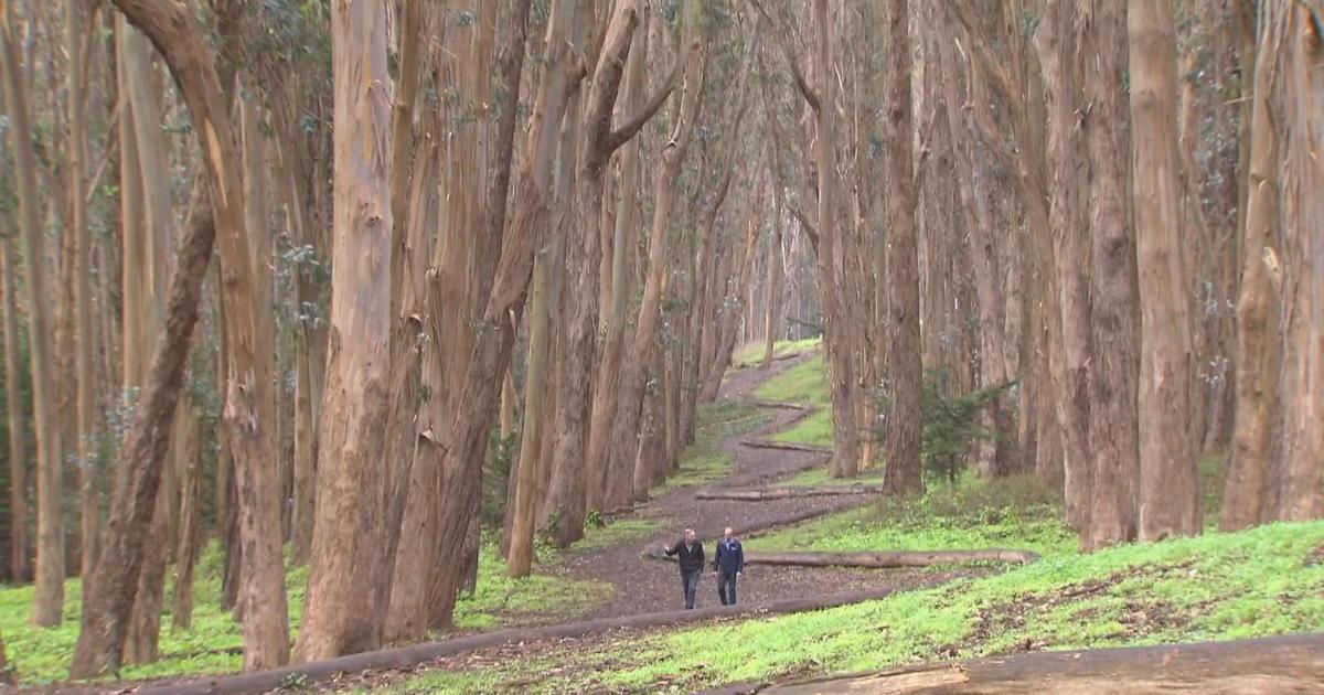 Presidio Park In San Francisco A Beautiful Enclave With A