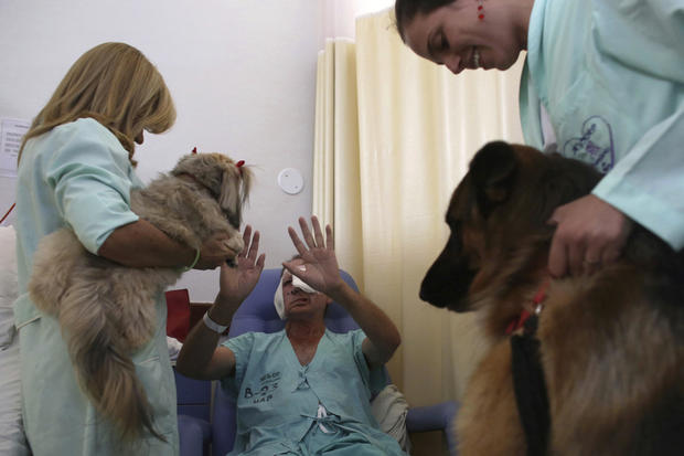 Brazilian therapy dogs
