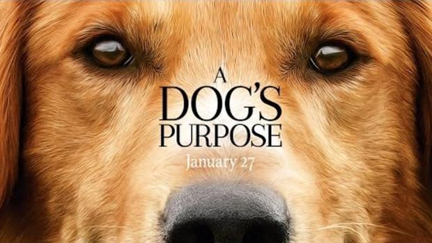 Peta A Dogs Purpose Video
