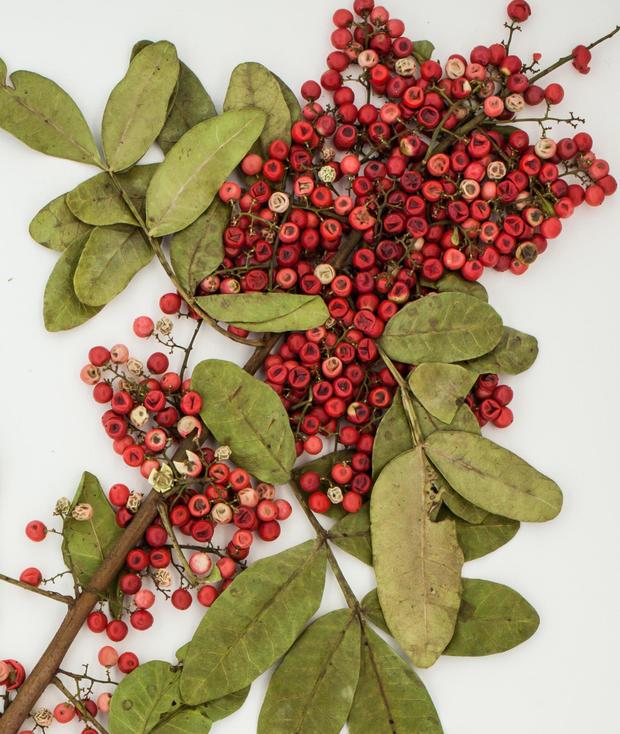 brazilian-peppertree.jpg
