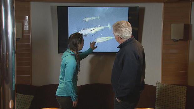 phillips-antarctica-killer-whales-frame-3098.jpg
