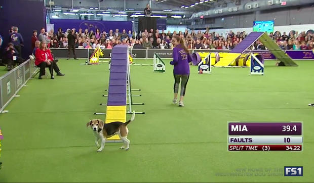 mia-the-beagle.jpg